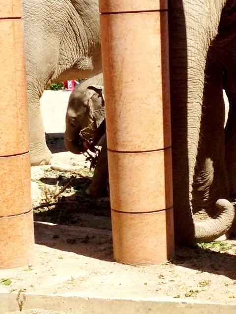 Pytteliten elefant.